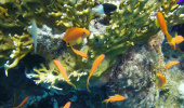 AQUARIUMS - THE ENRICHMENT OF YOUR HOME